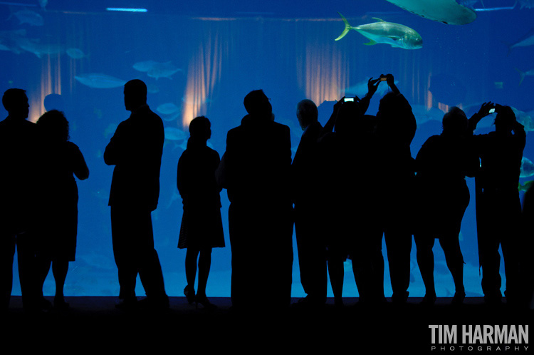wedding ceremony reception georgia aquarium